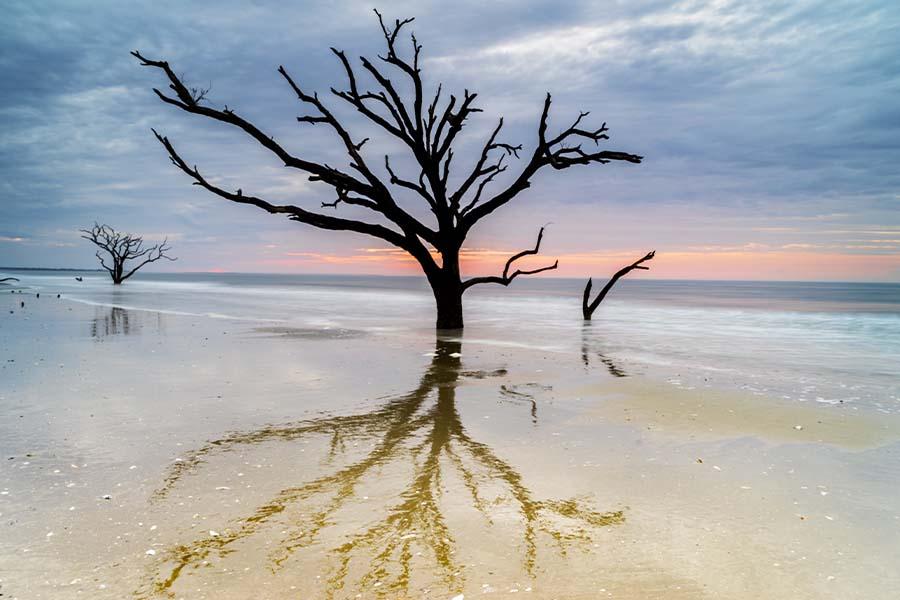 Edisto Island, SC - Old and Weathered Oak Tree at the Edisto Island Botany Bay Beach in South Carolina at Sunset