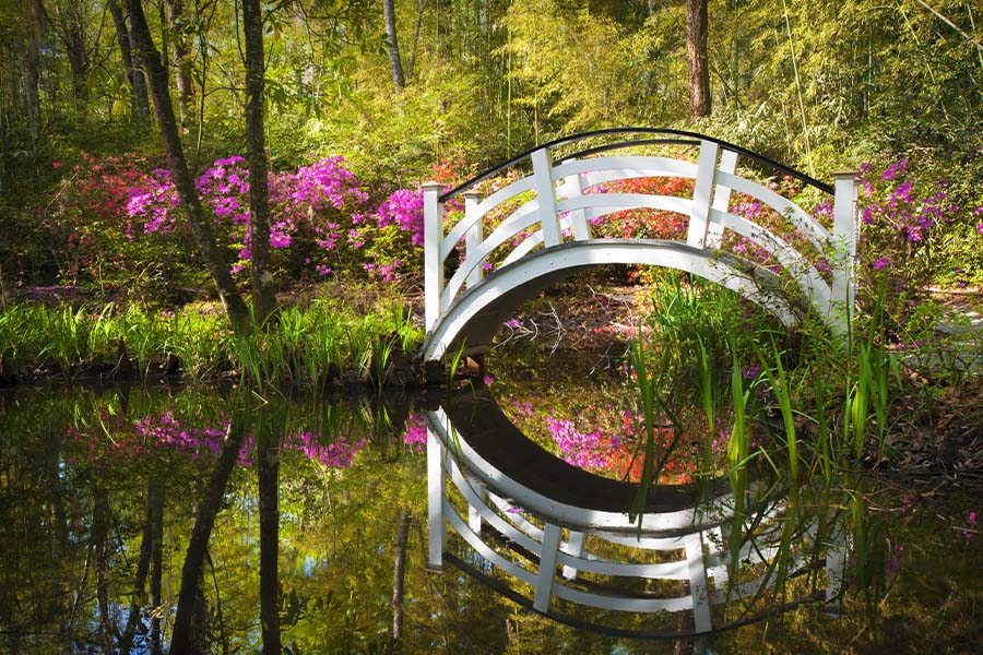 Goose Creek, SC - Blooming Spring Azalea Flowers in a Garden at Goose Creek, South Carolina Near Charleston